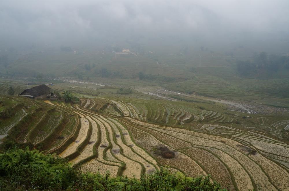 Vistas de los arrozales.