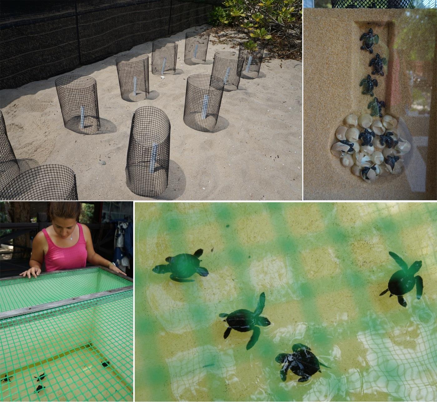 Georgetown y la isla de penang un mundo por recorrer for Piscina para tortugas