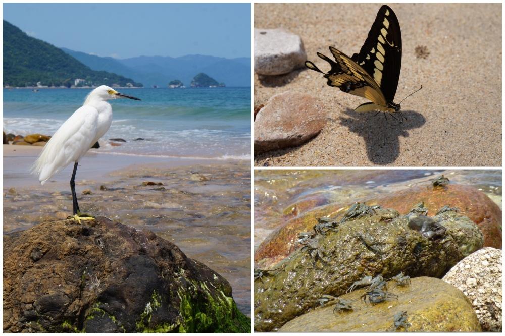 """Muestras de la """"fauna"""" que se podía ver en los alrededores de la playa."""