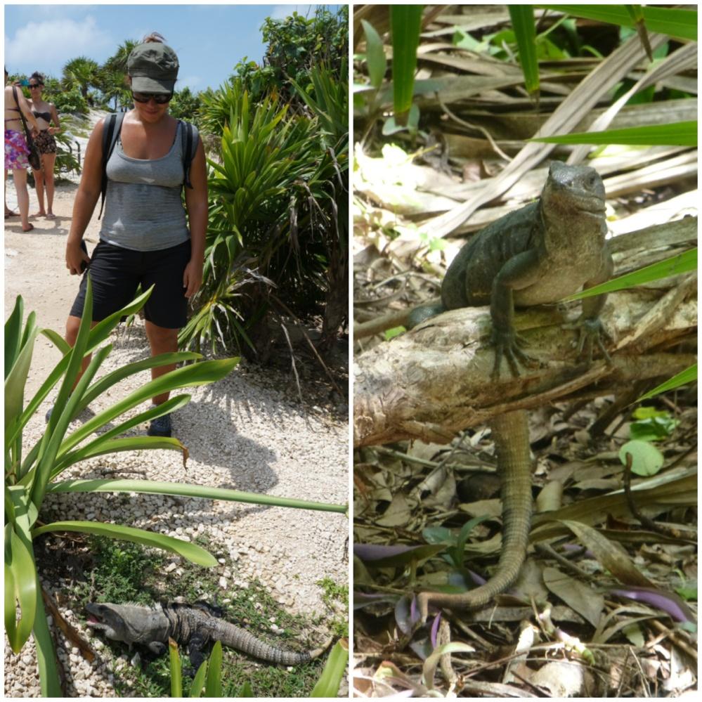 Raquel observando a un lagarto comer. Otros nos observan a nosotros algo camuflados!