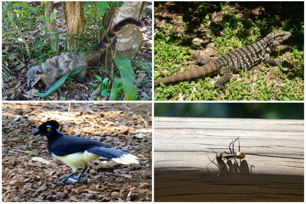 La diversidad de fauna es increíble.