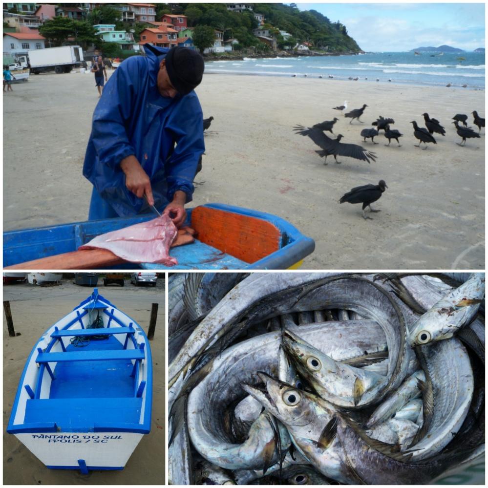 Arriba: Pescador cortando una manta y lanzando los despojos a las aves. Abajo: Barca del pueblo y botín del día.